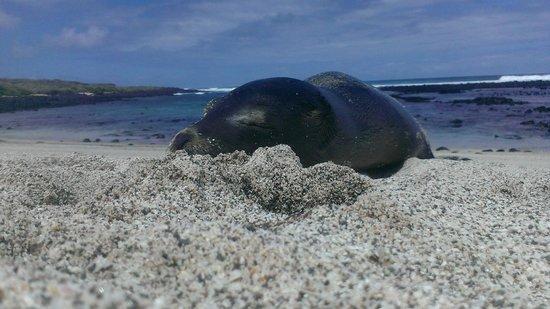 Sharksky Ecoadventures Galapagos: Sea lion