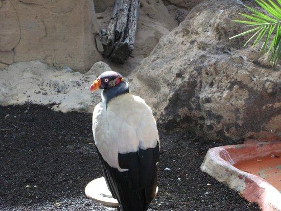 Park Las Aquilas Jungle Park : Bird of Prey