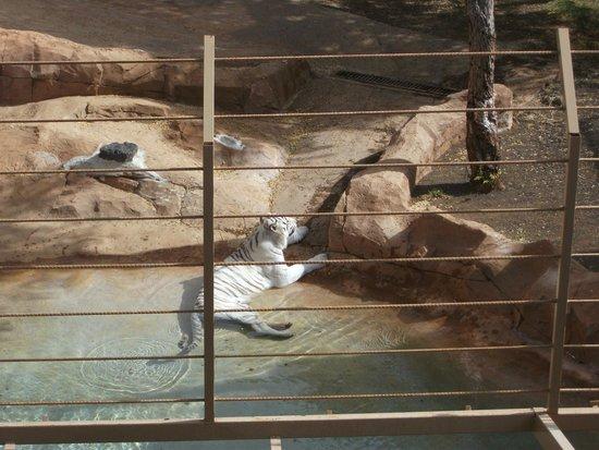 Park Las Aquilas Jungle Park : Tiger