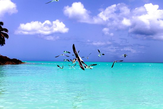 COCOS Hotel Antigua: gabbiani in volo
