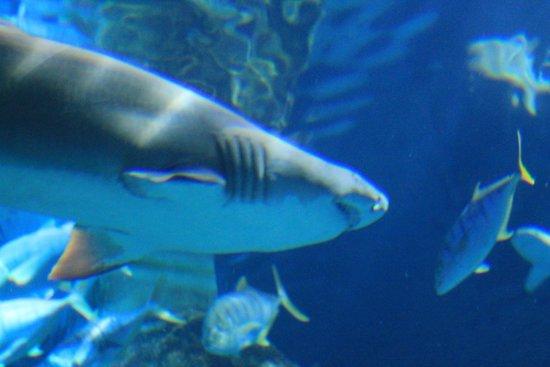 SEA LIFE London Aquarium: Aquário dos tubarões