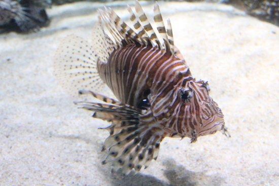 SEA LIFE London Aquarium: Aquário