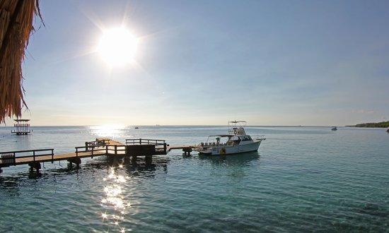 Hilton Curacao: Scubadiving