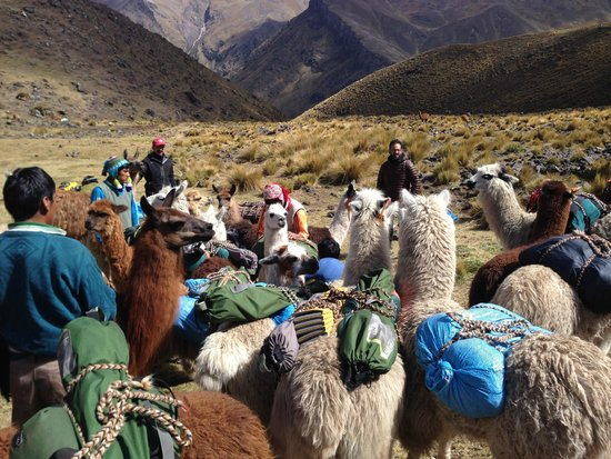 Llama Pack Backpacker: Llamapack trek
