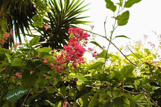 Guappo Chacara Hostel: Natureza!