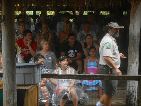 Airboat In Everglades : show