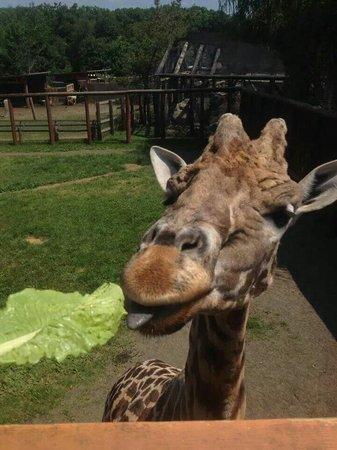 Ludlow, Μασαχουσέτη: Lupa Zoo
