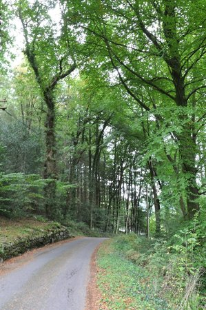 Tan Dinas Country House : Nice short road from Betws-y-Coed