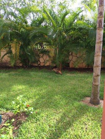 Sandos Playacar Beach Resort : Jardines de la habitación