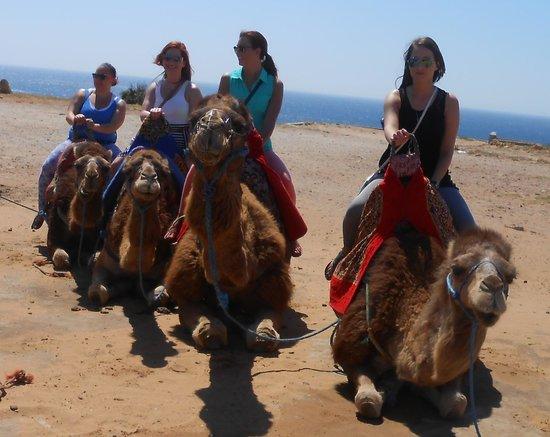 Aziz Benami Private Guide Tangier : Camels!!