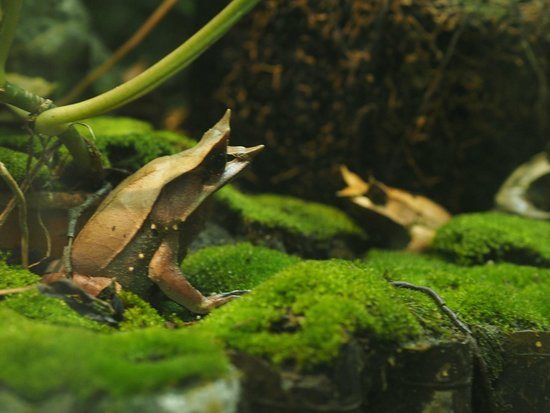 Entopia : Exotic Frogs