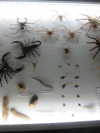 Entopia : Scorpions etc