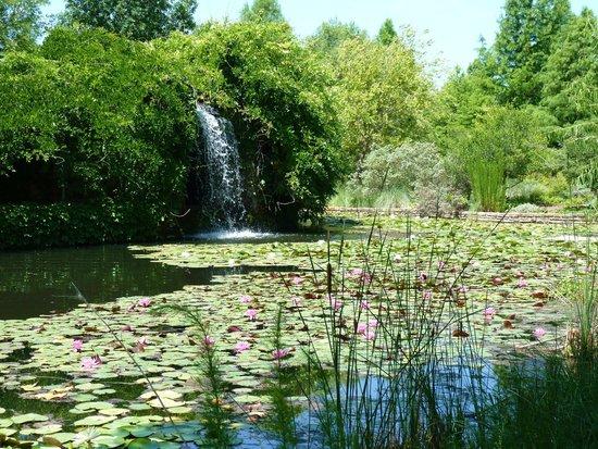 Clark Gardens Botanical Park: Waterfall At Clark Gardens