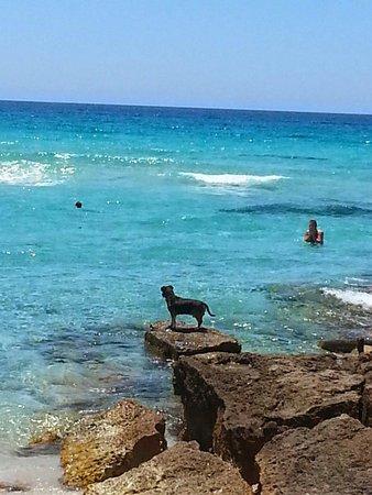 Playa de Migjorn : Playa Migjorn