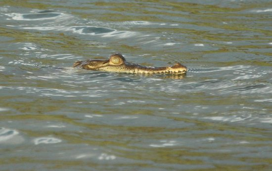 Lookout Inn Lodge: Nearby crocodiles lurk in the lagoon