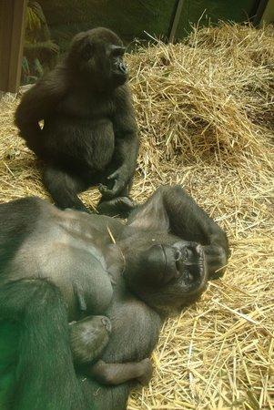 Zoo Zurich : Amor de mãe.