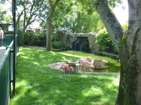 Drusillas Park: Flamingos