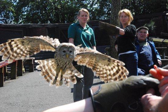 Kielder Water Bird of Prey Centre: flying demo