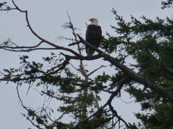 Deception Pass Tours: Eagle