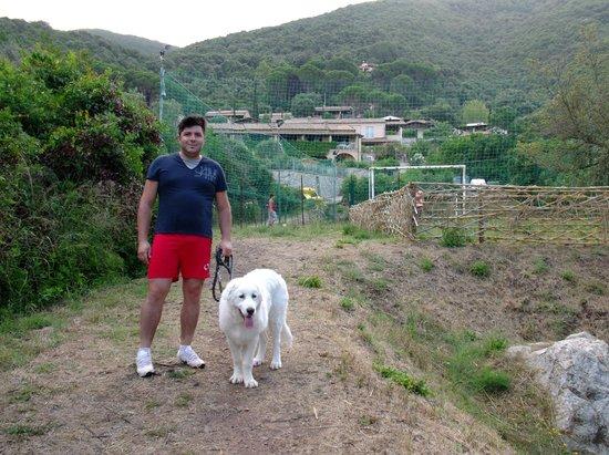 Helios Relais B&B : Zona sgambamento cani