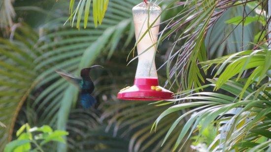 Residence Orcea : Abbeveratoio per uccelli