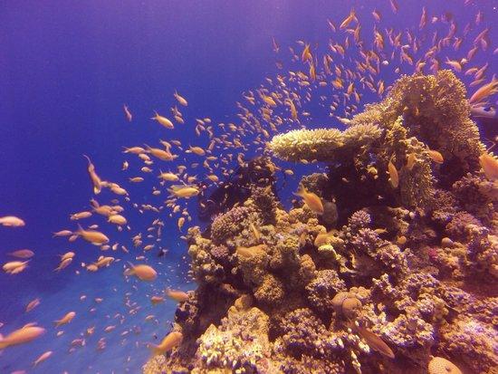 Diving Ocean Makadi Bay: Reef Prima Life