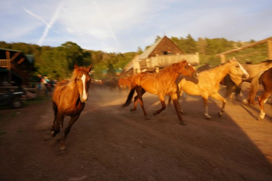 Black Mountain Ranch : BMR Stampede. Horses being sent out to pasture for the night.
