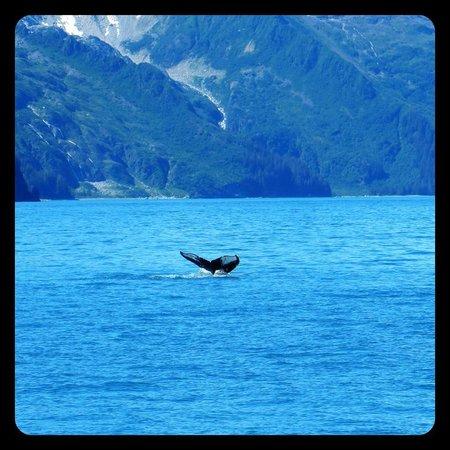 Kenai Fjords Tours: Whale Tail
