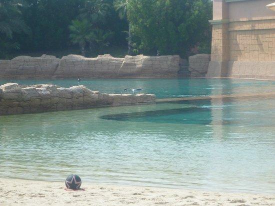 Dolphin Bay: :-)