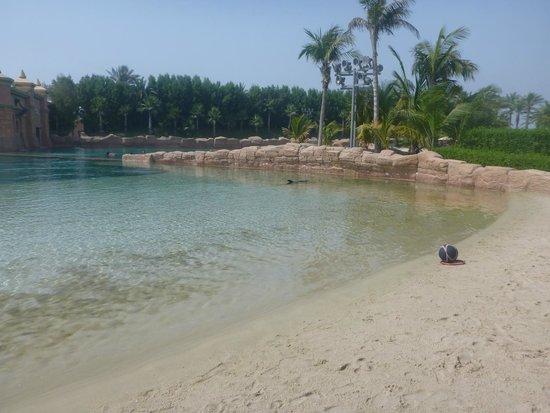 Dolphin Bay: Bay