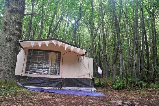 Badgells Wood Camping: our pitch