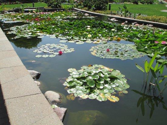 Sunken Gardens: Two beautiful lily ponds