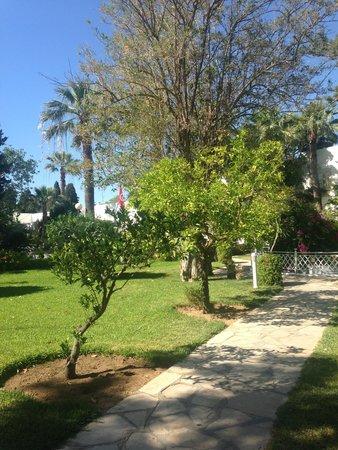 The Orangers Beach Resort & Bungalows: Hotel greenery