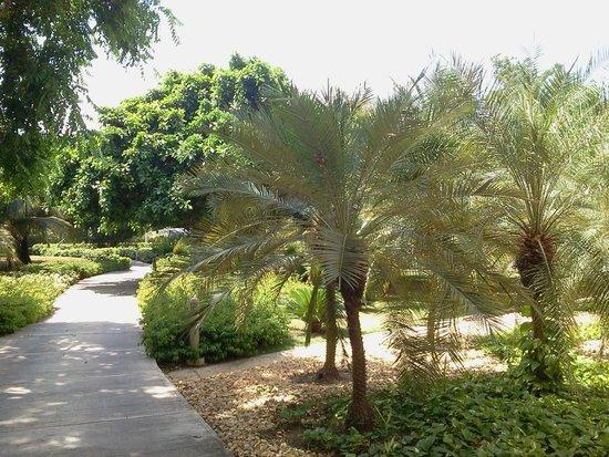 Decameron Barú: Jardines entre las habitaciones