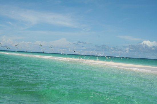 Blackout Sportfishing: sand cay