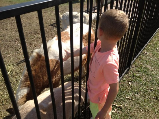 Gold Coast Holiday Park & Motel: Patting the farm animals