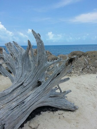 "Snorkel Park Beach: Driftwood at Snorkel Park. Noticed someone else put up a picture & said it was ""Coral"". Incorrec"