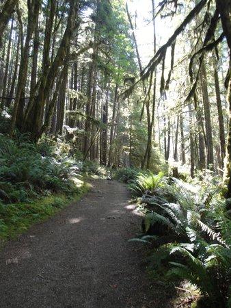 Skookumchuck Narrows Provincial Park: Easy trail through the forest