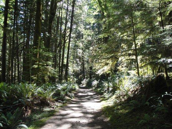 Skookumchuck Narrows Provincial Park: Sun dappled trail