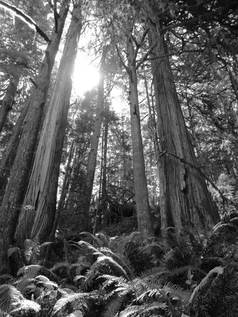 Skookumchuck Narrows Provincial Park: Beautiful old grown forest