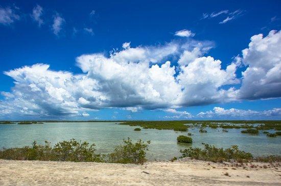 Melia Buenavista: Hwy on the way through mangroves.