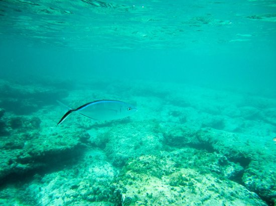 Melia Buenavista: off swimming beach