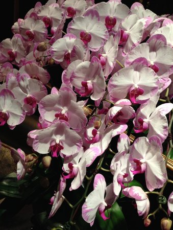 Four Seasons Hotel Singapore: Beautiful orchid display