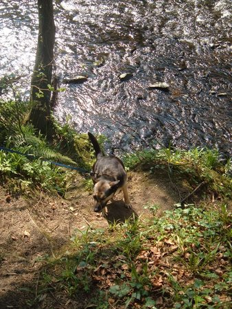 Roe Valley Country Park: Walking the dog