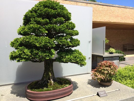 Chicago Botanic Garden Bonsai