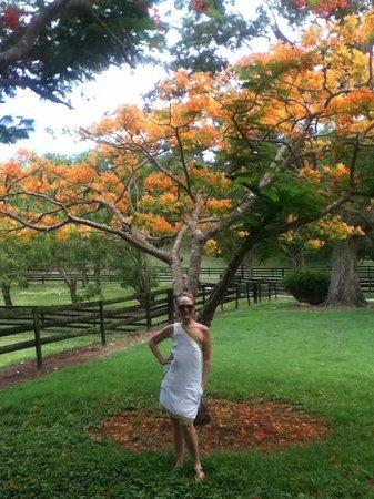 Arabian Farm Luxury Villas: The farm nature, Flamboyan trees