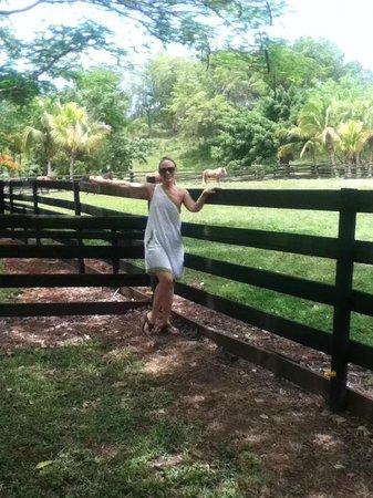 Arabian Farm Luxury Villas: The farm were the horses are  walking in peace
