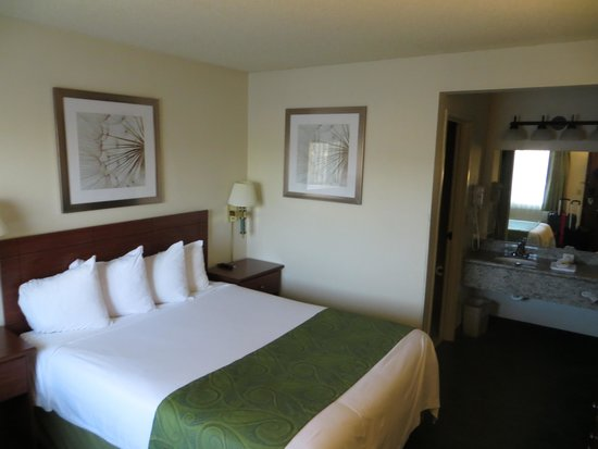 Days Inn Bellevue Seattle: room with one queen bed