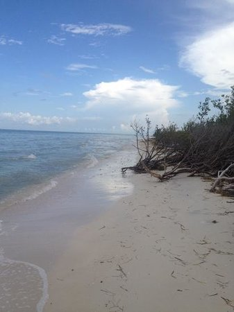 Honeymoon Island State Park : Paradise