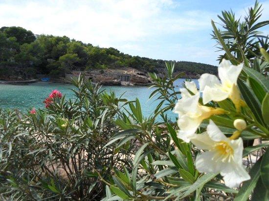 Sandos El Greco Beach Hotel: View of Bay